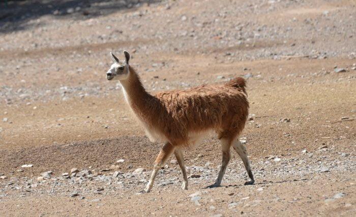 Ecoparque: se intensifican los controles sanitarios sobre los animales